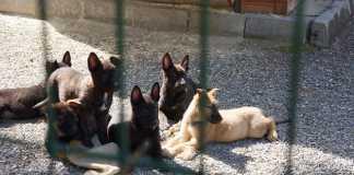 Emniyet hibe köpek